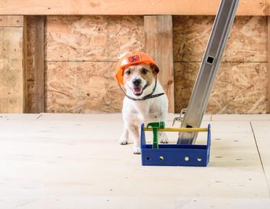 5 DIY Ideas for Your Pet