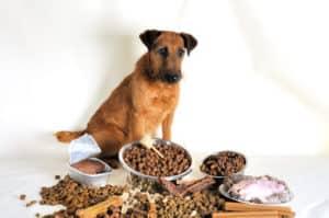10 Worst Dog Foods