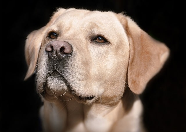 How Often Should A Dog Be Bred