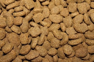 best dog food for miniature pinscher