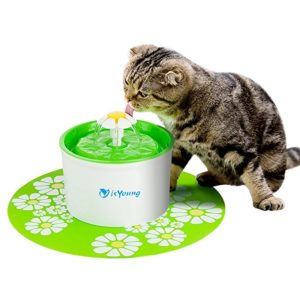 Kitten drinking from isYoung Pet Fountain