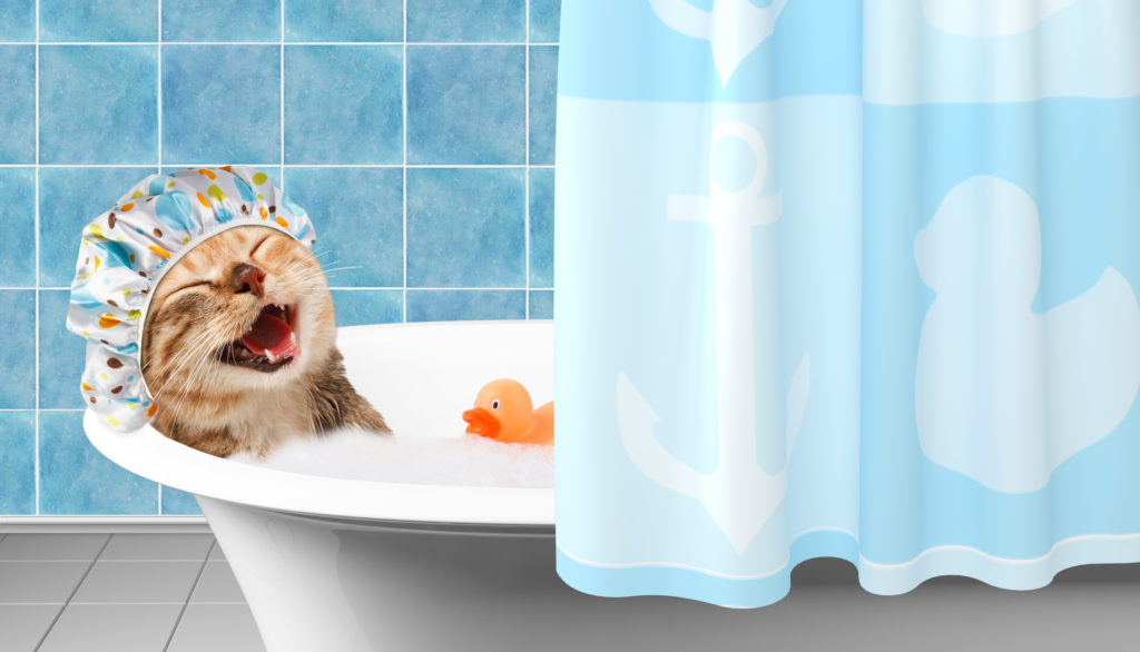 cat laughing in the bathtub